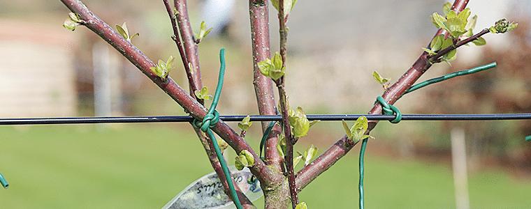 Différents diamètres de branche