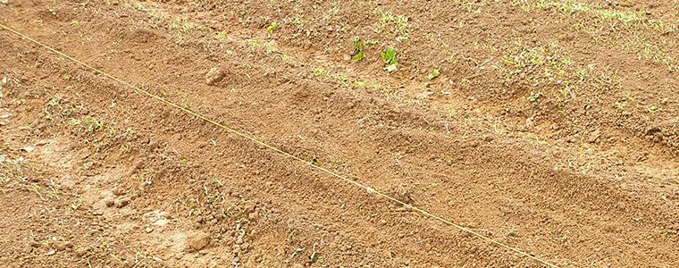 Semis avec ficelle petit pois